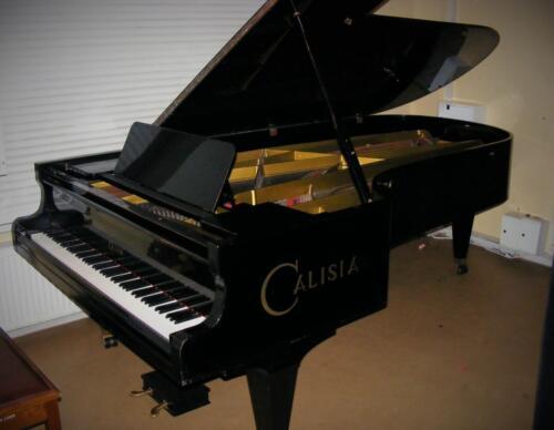 Koncertowa CALISIA M 280
